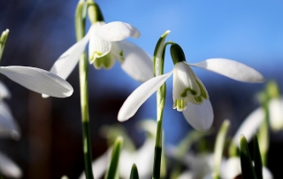 flower-270623_640