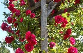 garden-155049_640