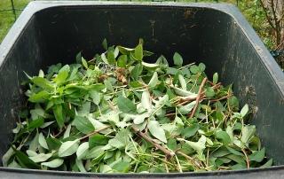 green-waste-486011_640