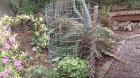 compost bin pic